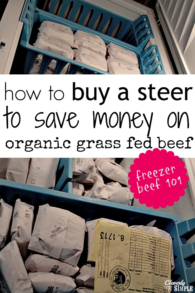 how to buy a steer to save money on organic grass fed meat