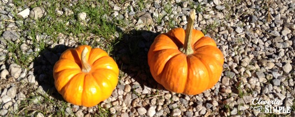 Painting Pumpkins with Your Kids the pumpkins