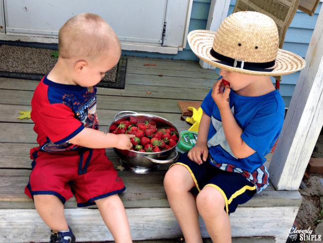 enjoying fresh strawberries before making strawberry shortcake