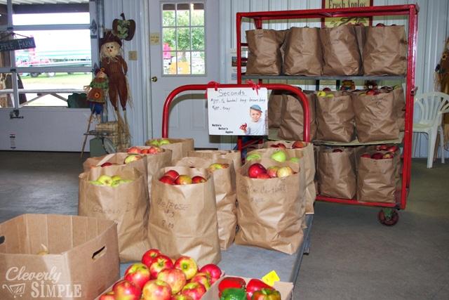 Apples in Bulk for Applesauce Canning