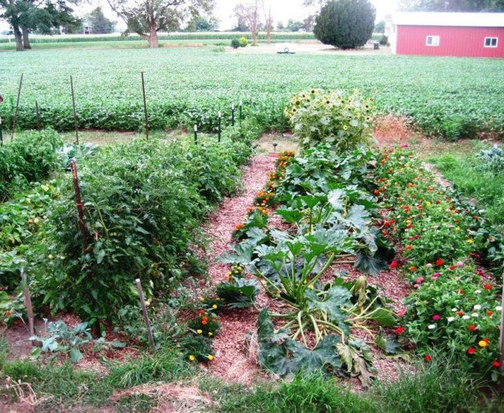 Full Garden ready to harvest