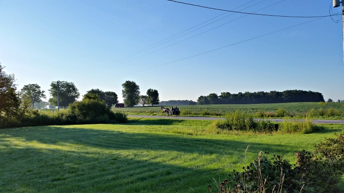 week 7 Amish