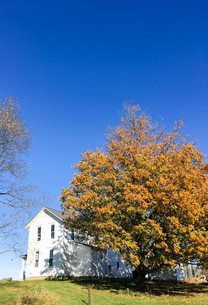 white house with fall tree