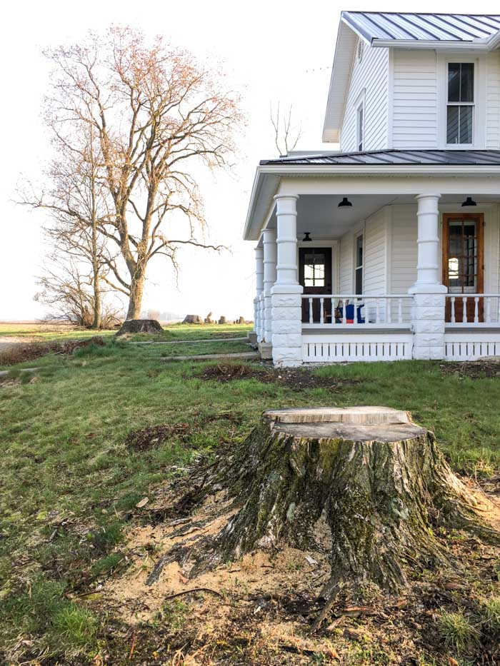 tree stumps in front of farmhouse