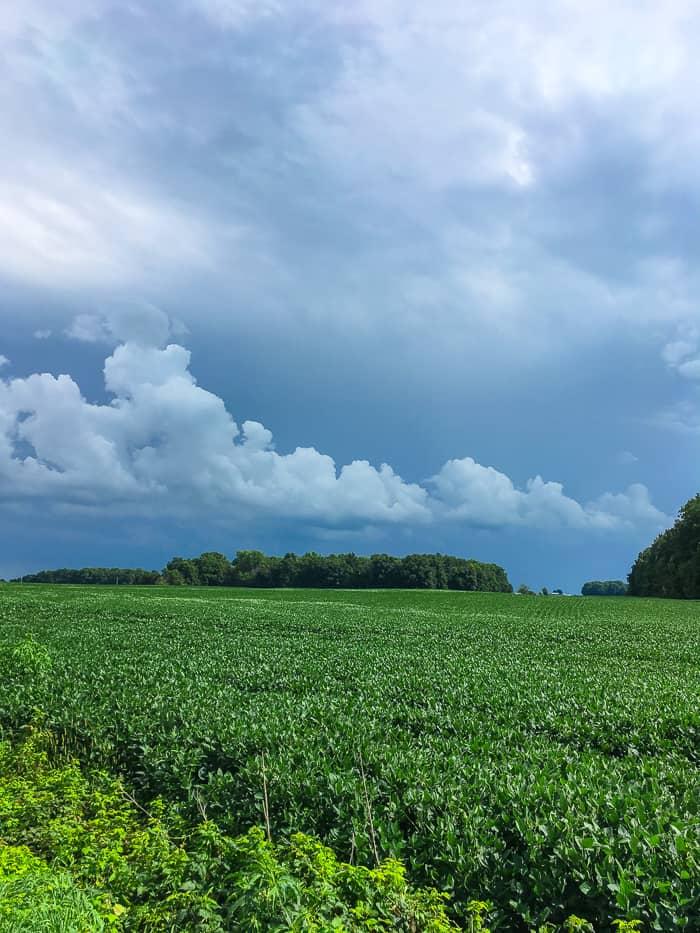 bean field in Ohio