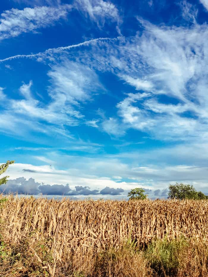 sky with corn field