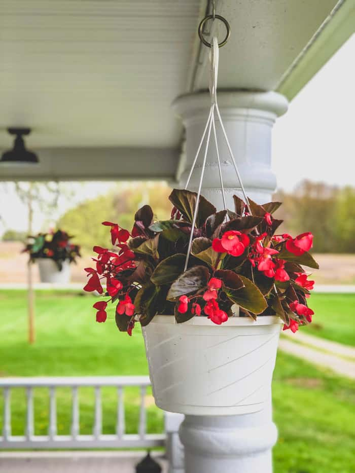 begonias and porch flower basket