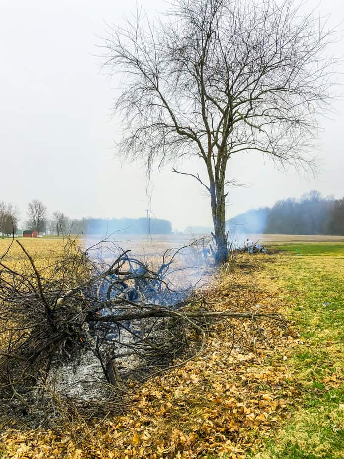 tree in fenceline