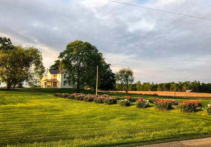 peonies on lane of farmhouse