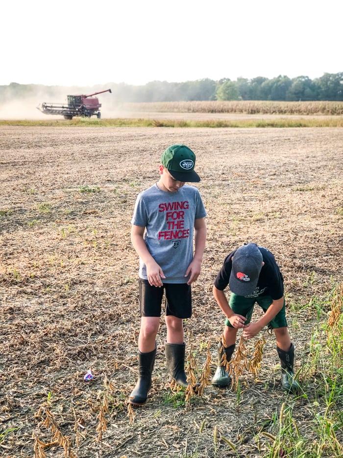 boys in soybean field