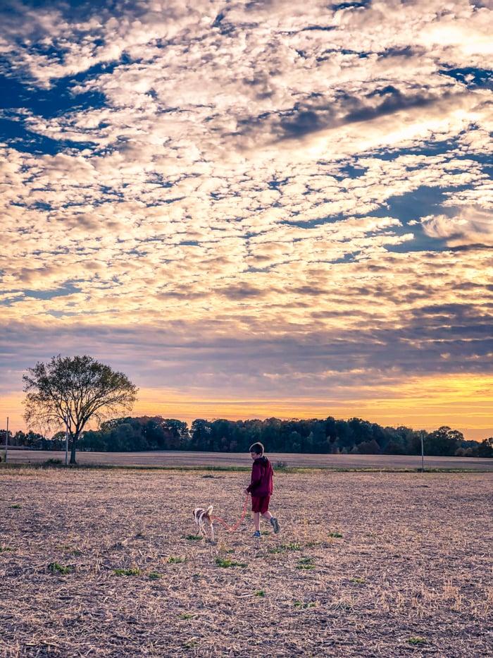 dog on leash in field