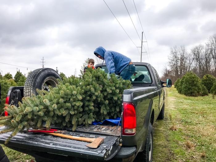 loading christmas tree onto truck