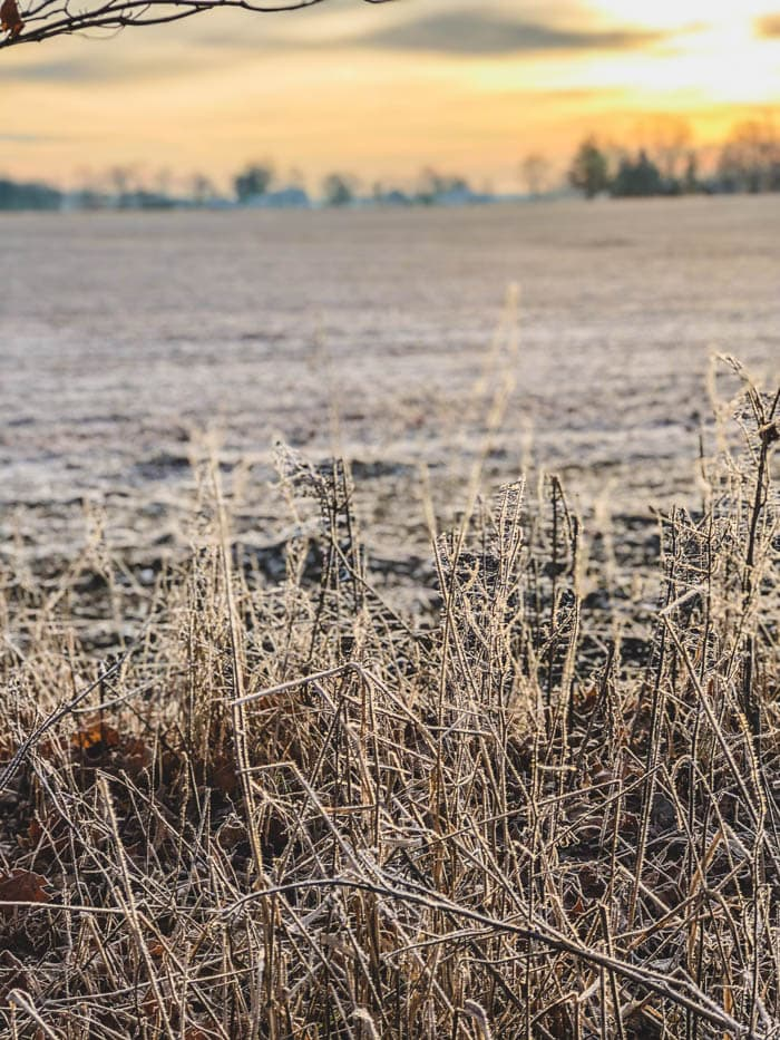 ice covered farm field