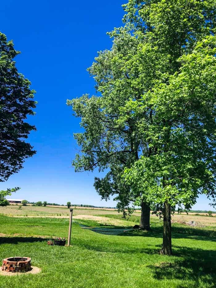 hammock with tree