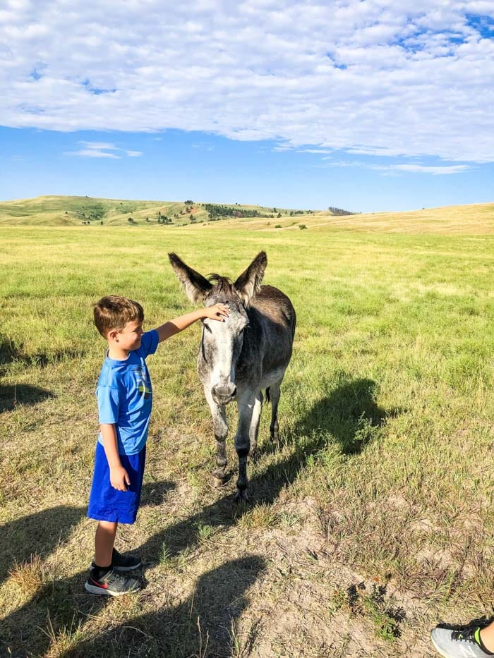 kid with burros in Custer State Park