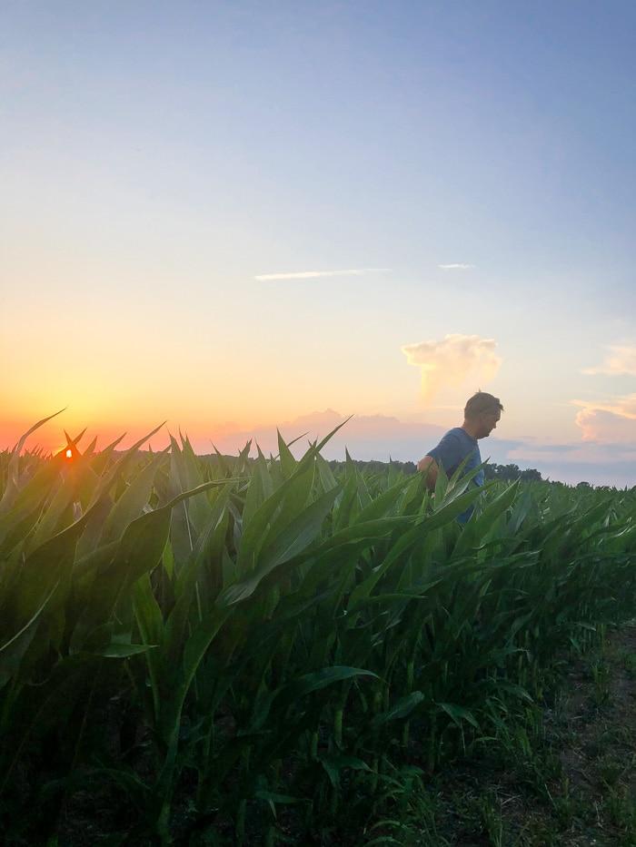 dad in corn field