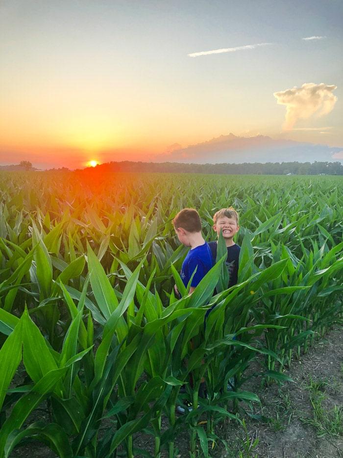 kids in cornfield