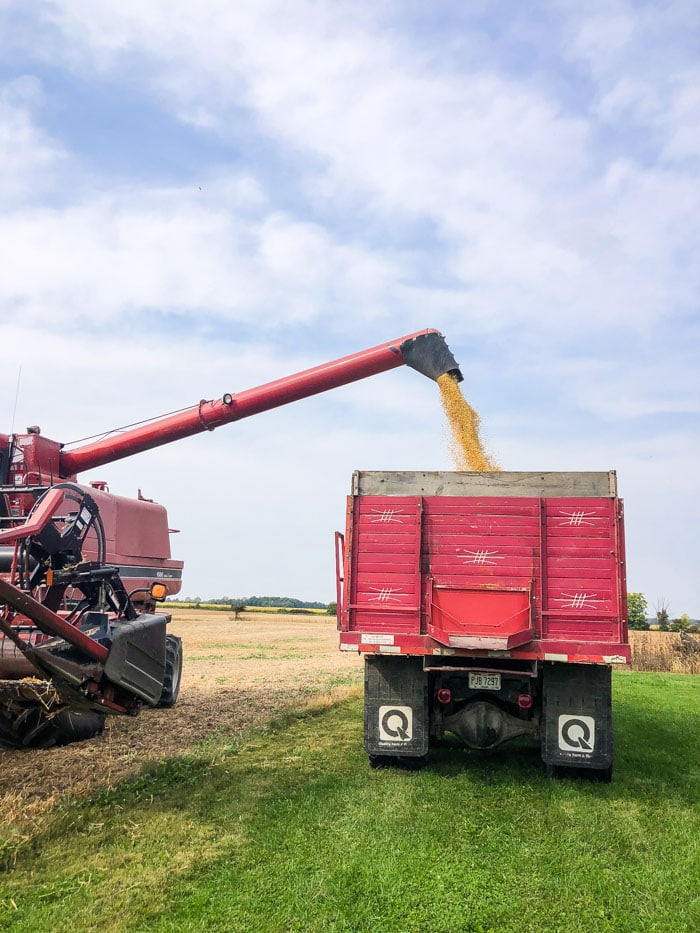 soybean harvest and combine
