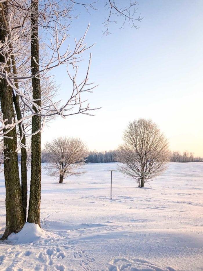 white landscape in snow